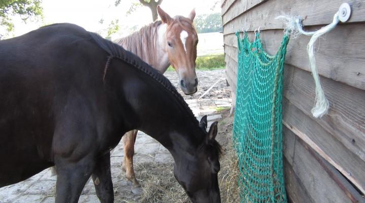 Door een hooinet doen de paarden langer over hun eten.